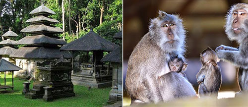 Bali Attractions Places Visit Tabanan Indonesia Alas Kedaton Monkey Forest