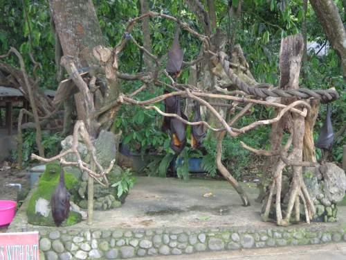 Objek Wisata Alas Kedaton Kabupaten Tabanan Mentari Bali Holiday Kalong