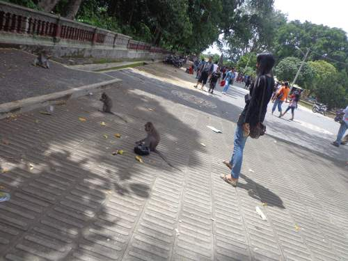 Objek Wisata Alas Kedaton Kabupaten Tabanan Mentari Bali Holiday Melihat