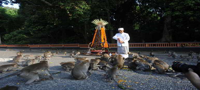 Objek Wisata Alas Kedaton Monkey Forest Temple Sejarah Tiket Masuk