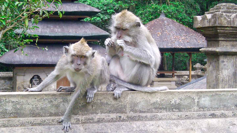 Tanah Lot Sunset Tour Wonderful Bali Wonderfultours Monkey Alas Kedaton
