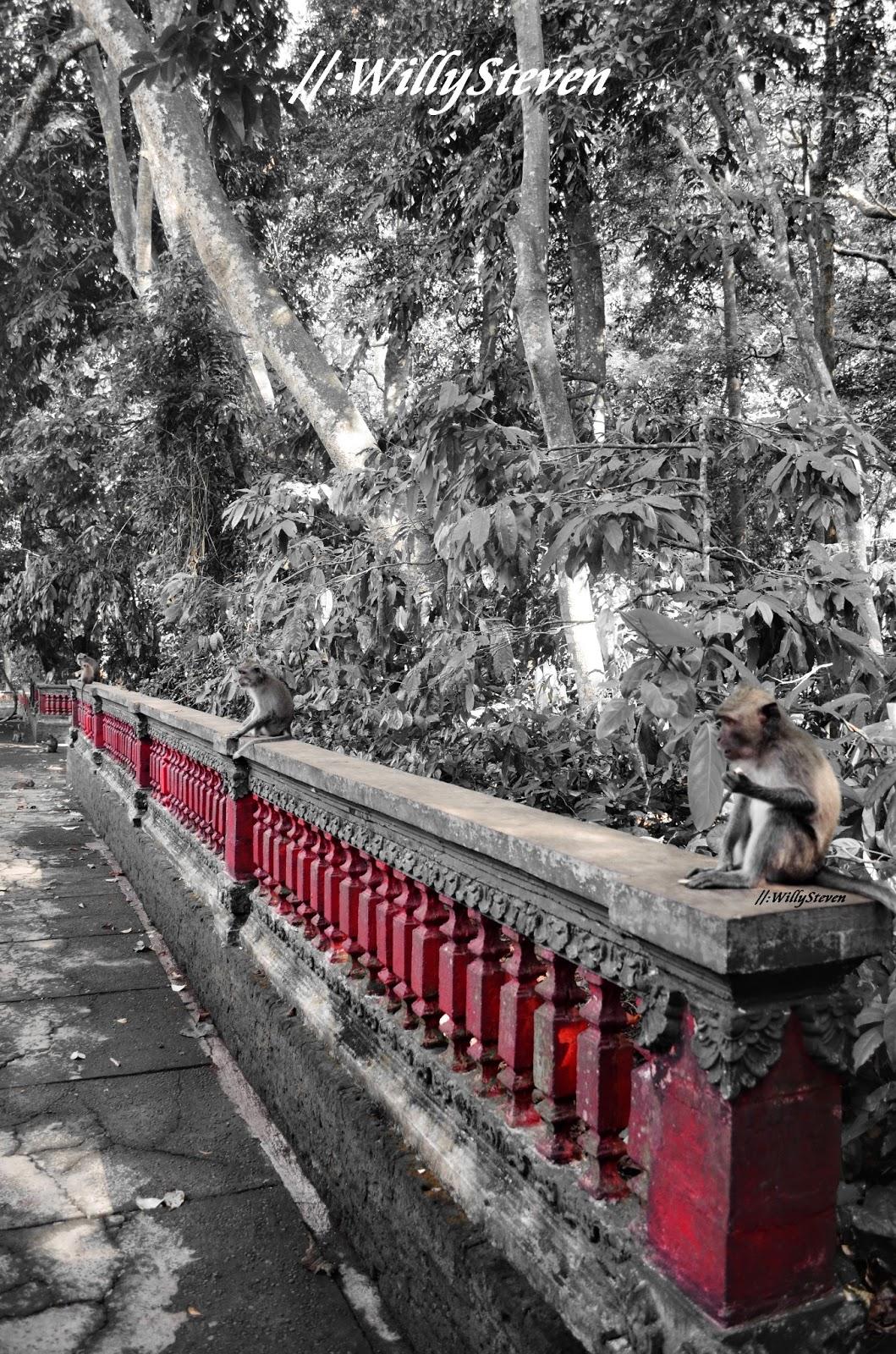 Travellermeds Islands Nation Bali Alas Kedaton Monkey Forest Kabupaten Tabanan