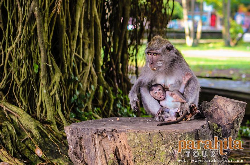 Wisata Alas Kedaton Objek Kab Tabanan