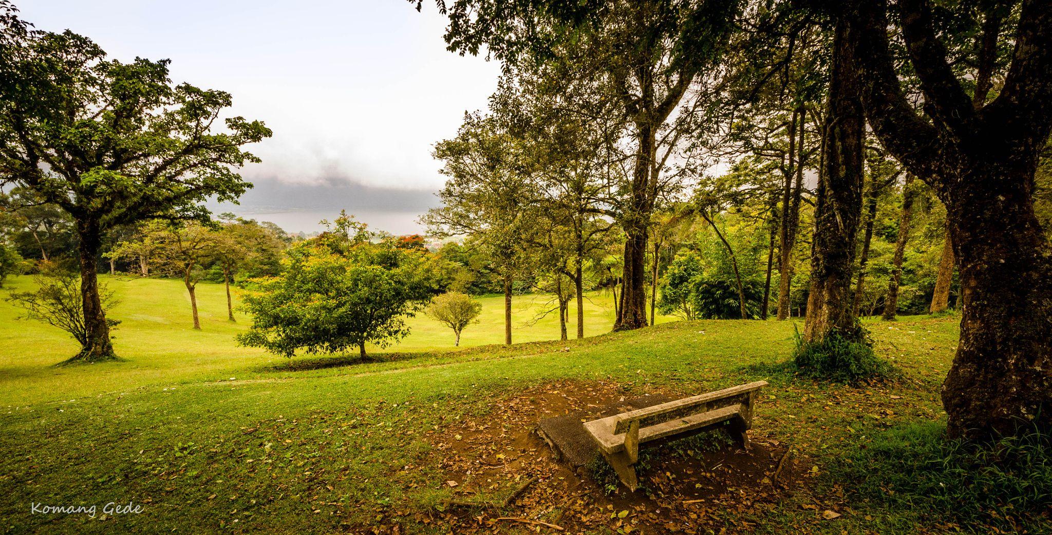 Bedugul Botanical Garden Bali Indonesia Kebun Raya Eka Karya Kab