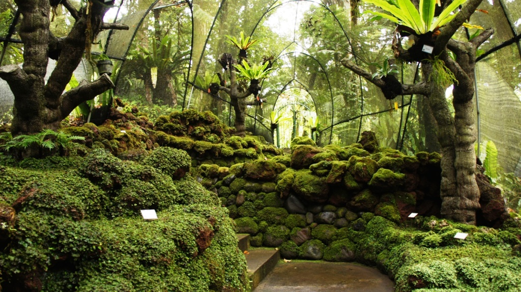Indahnya Kebun Raya Eka Karya Bali Wisata Terdapat Koleksi Lebih