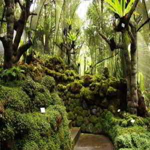 Kebun Raya Eka Karya Bedugul Bali Sejarah Harga Tiket Masuk