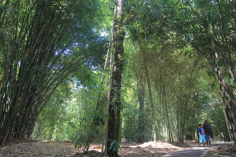 Mongabay Travel Menikmati Tanaman Berbicara Kebun Raya Taman Bambu Eka