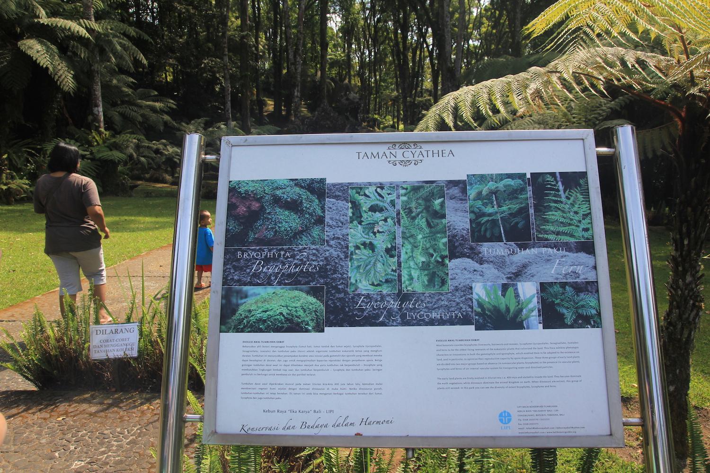 Mongabay Travel Menikmati Tanaman Berbicara Kebun Raya Taman Chytachea Melengkapi