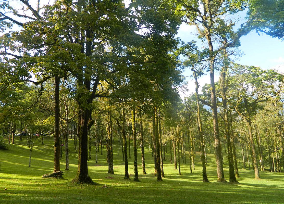 Pohon Rindang Kebun Raya Bedugul Balivilla Id Kab Tabanan