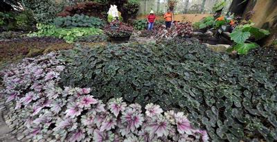Rizal Ensyamada Biodiversitas Memburu Begonia Halmahera Pengunjung Melihat Berbagai Jenis