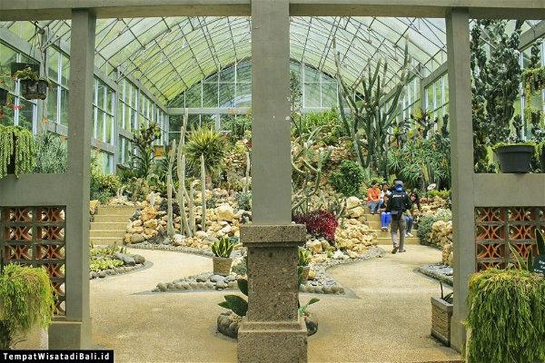 Satu Harapan Menilik Keindahan Tanaman Langka Kebun Raya Eka Rumah