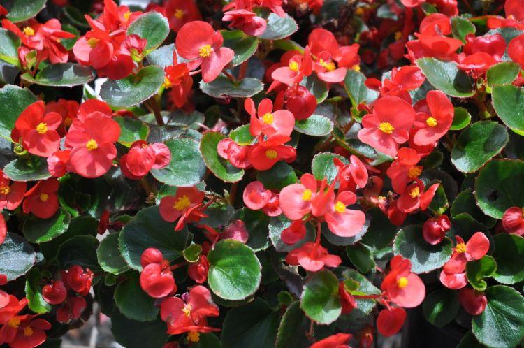 Tanaman Hias Hingga Obat Demam Sipilis Dikembangkan Bedugul Kebun Raya