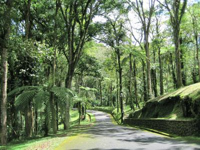 Wisata Kebun Raya Bedugul Kab Tabanan