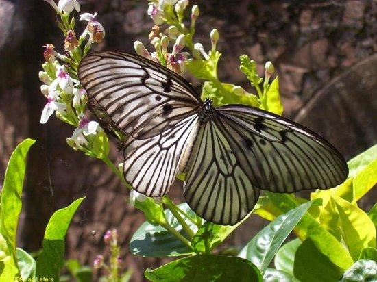 Bali Butterfly Park Tabanan 2018 Photos Tripadvisor Taman Kupu Kab