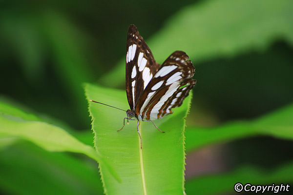 Bali Butterfly Park Taman Kupu Animal Attraction Kab Tabanan