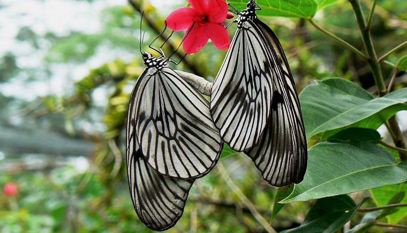Bali Butterfly Park Taman Kupu Kids Guide Kab Tabanan