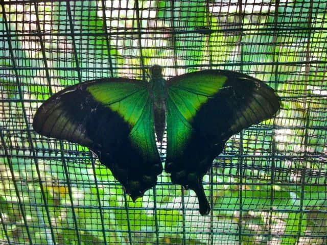 Bali Butterfly Park Taman Kupu Littlebalilove Img 8236 But3 But4