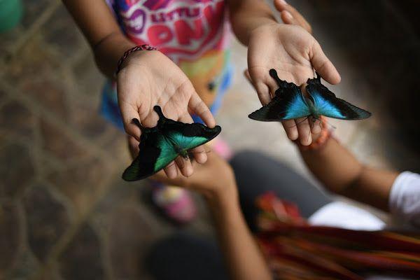 Bali Butterfly Park Taman Kupu Tabanan Regency Gardens Kab