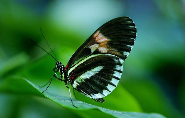 Bali Butterfly Park Taman Kupu Tabanan Regency Kab
