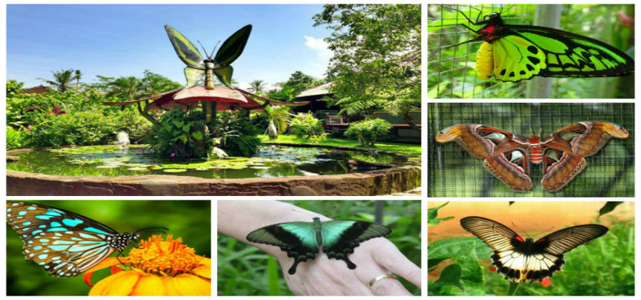 Baliislandexperience Bali Butterfly Park Taman Kupu Kab Tabanan