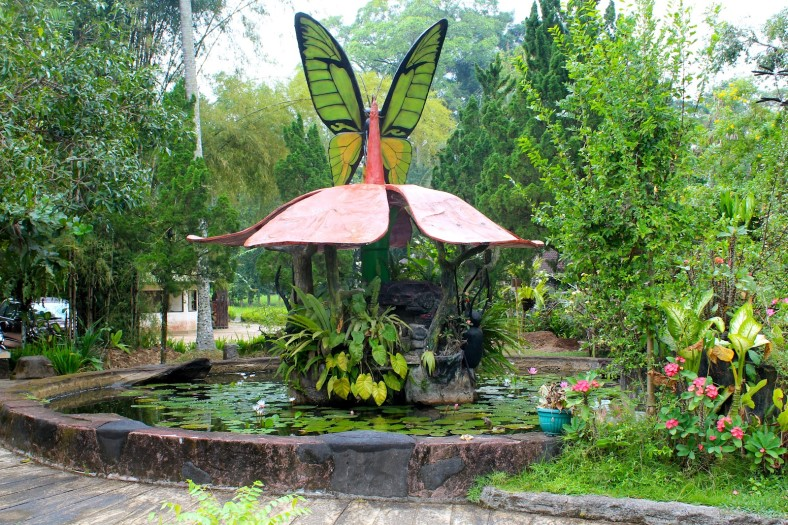 Butterfly Park Bali Taman Kupu Collecting Species 1 5 Hour