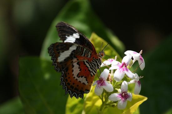 Butterfly Taman Kupu Picture Bali Park Kab Tabanan