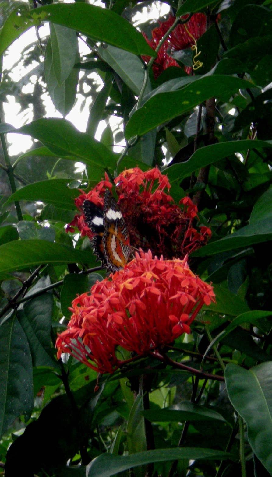 Hari Ceria Pulau Dewata Taman Kupu Kab Tabanan Bagi Masyarakat