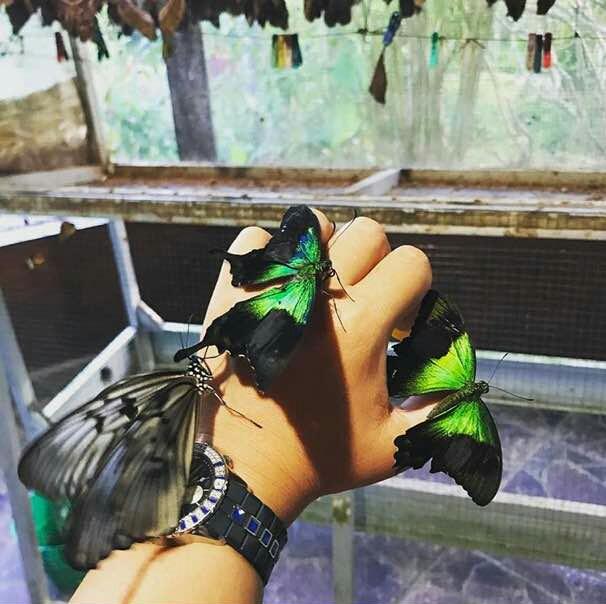 Ichi Rent Bali Serangga Indah Taman Kupu Lainnya Butterfly Kab