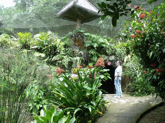 Le Park Aux Papillons Picture Bali Butterfly Tabanan Taman Kupu