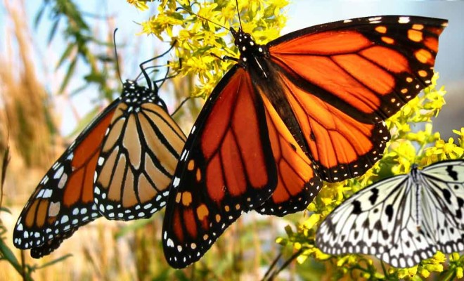 Melihat Kupu Cantik Bali Butterfly Park Smartmama Taman Kab Tabanan