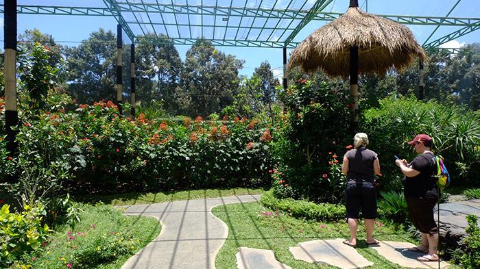 Melihat Ribuan Kupu Cantik Kemenuh Butterfly Park Bali Tempat Rekreasi