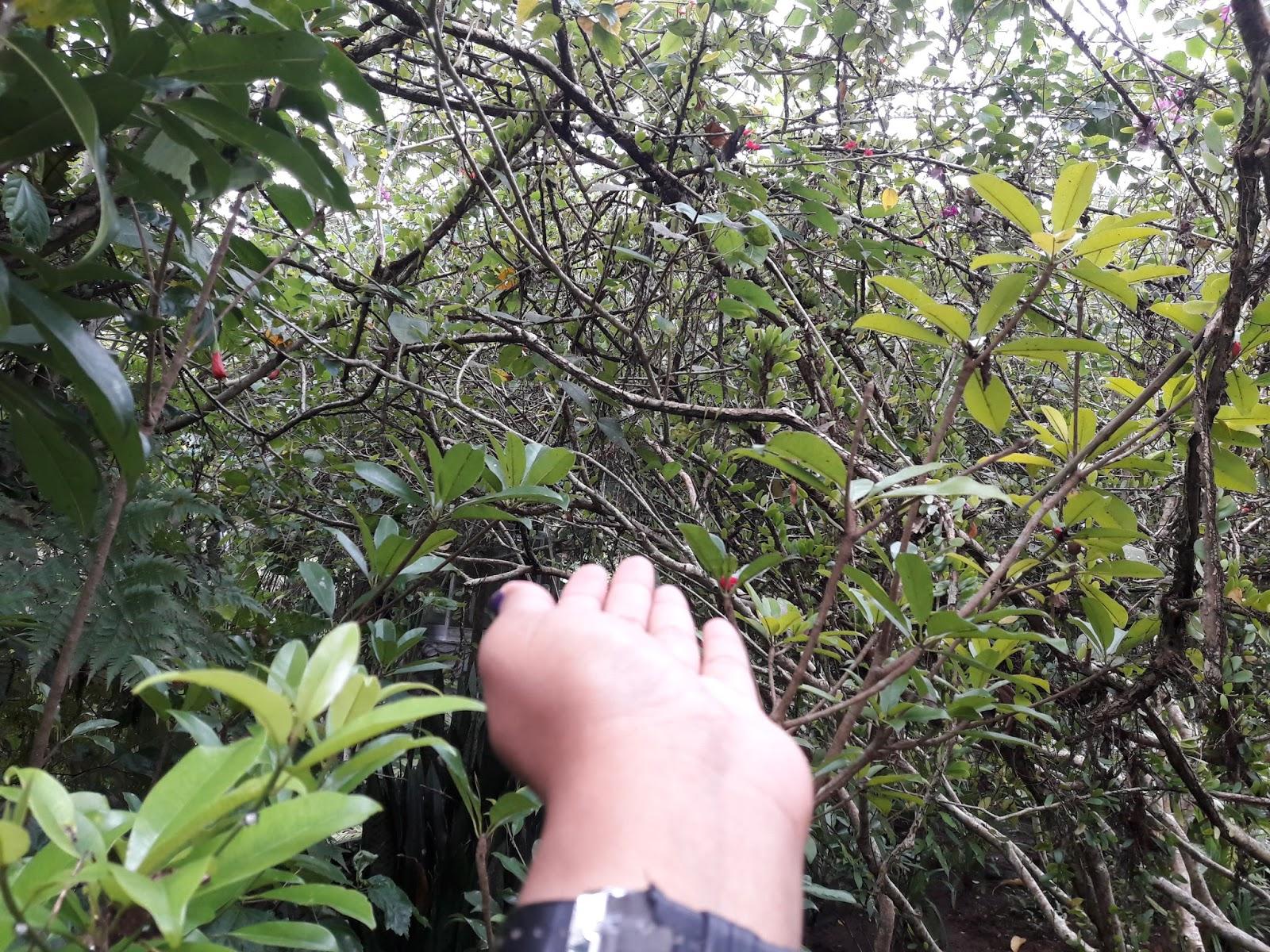 Objek Wisata Lokasi Harga Tiket Taman Kupu Butterfly Park Masuk