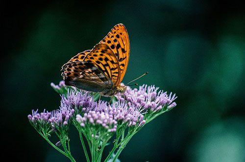 Objek Wisata Tabanan Bali Terbaik Wajib Dikunjungi Taman Kupu Butterfly