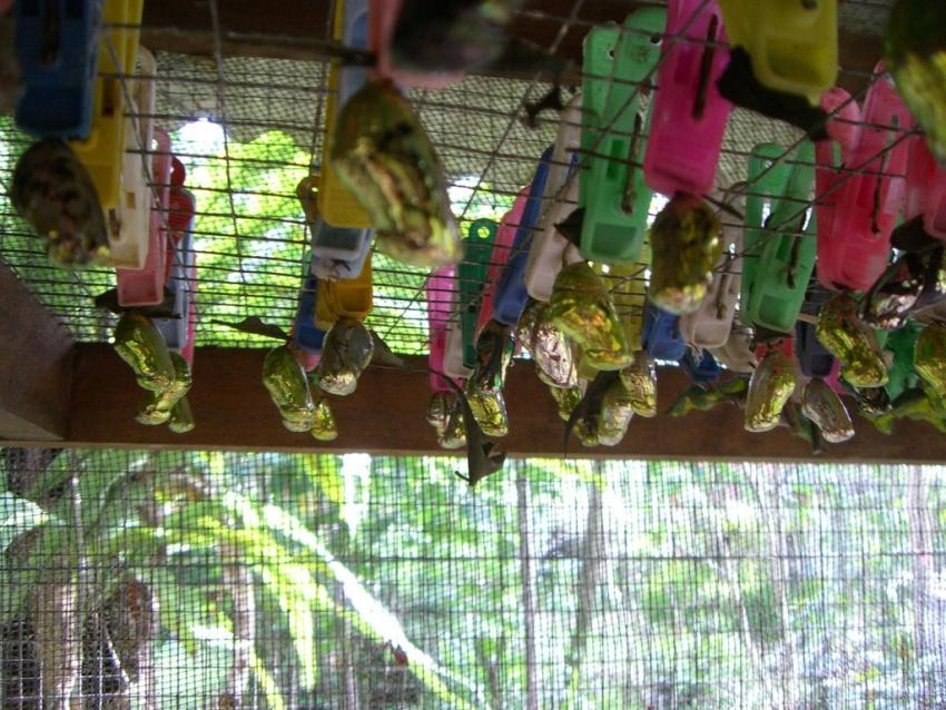 Taman Kupu Bali Butterfly Park Tabanan Cityseeker Kab