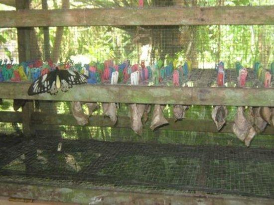 Taman Kupu Bali Picture Butterfly Park Tabanan Kab