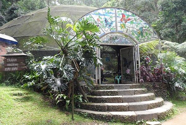 Taman Kupu Bali Wahana Edukasi Mengenal Keelokan Butterfly Kab Tabanan