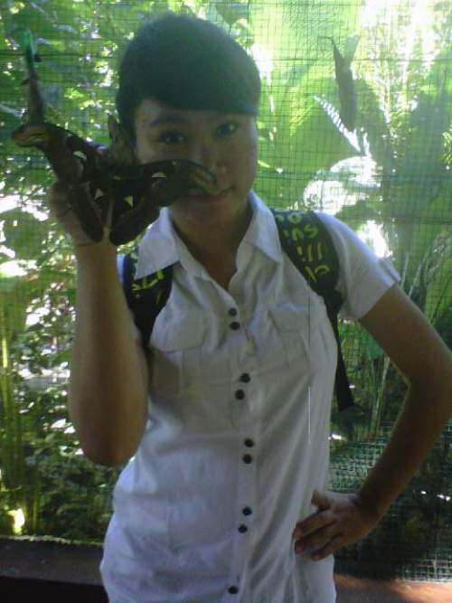 Taman Kupu Tabanan Bali Berbagai Jenis Koleksi Butterfly Park Kab