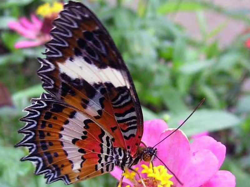 Taman Kupu Tabanan Surga Bagi Pecinta Jenis Tempat Wisata Diantaranya