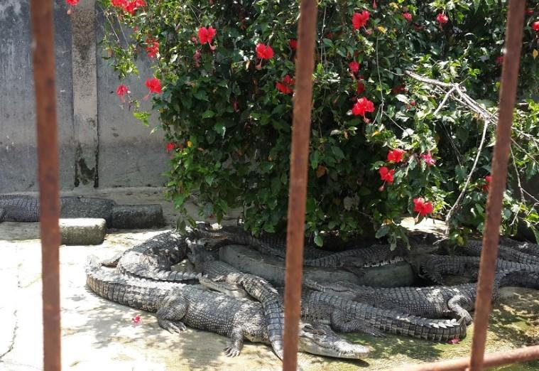 52 Objek Wisata Andalan Kota Tangerang Banten Pesona Keindahan Taman