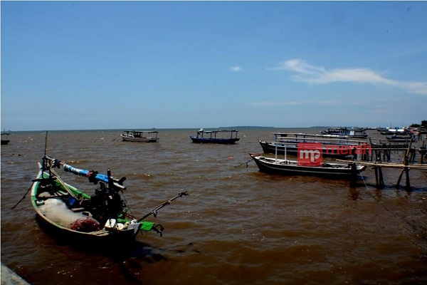 Tanjung Pasir Disulap Jadi Lokasi Konservasi Alam Ekowisata Mangrove Pantai