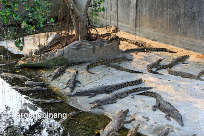 Aroengbinang Taman Buaya Tanjung Pasir Tangerang Kab