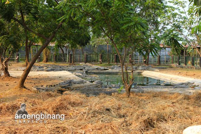 Buaya 3 Jpg Taman Tanjung Pasir Tangerang Kab