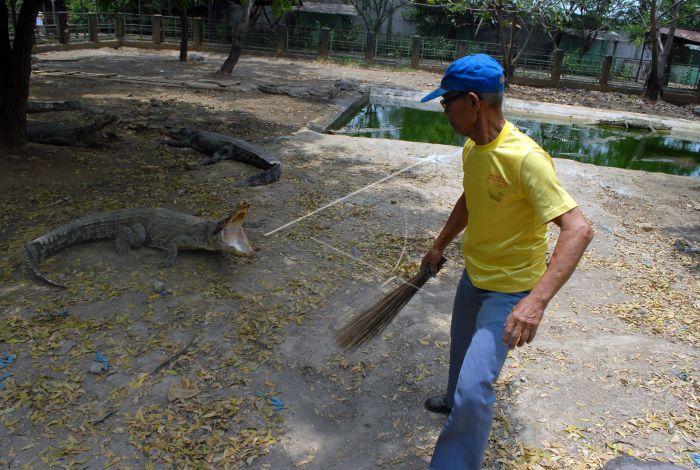Taman Buaya Tanjung Pasir Antara Foto Pekerja Mengusir Menyapu Area