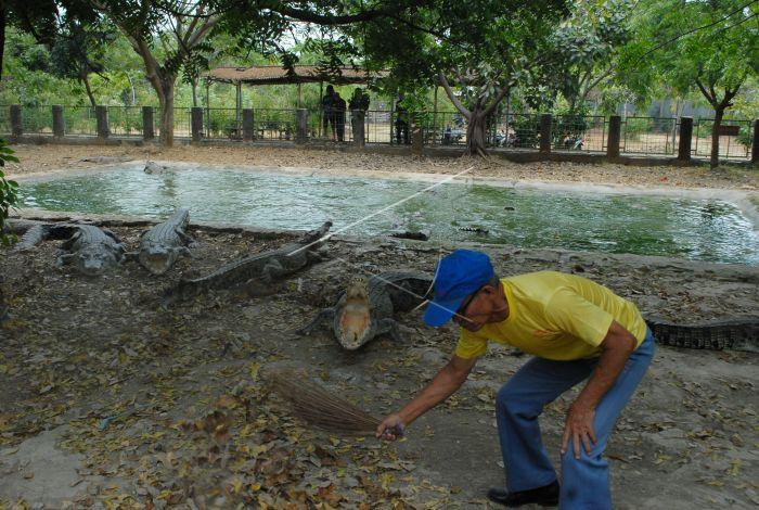 Taman Buaya Tanjung Pasir Antara Foto Pekerja Menyapu Area Penangkaran