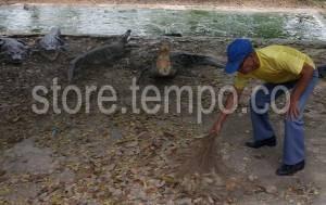 Taman Buaya Tanjung Pasir Image Preview Kab Tangerang
