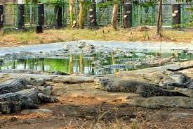 Taman Buaya Tanjung Pasir Tangerang Dasbor Pariwisata Ditetapkan Sebagai Salah