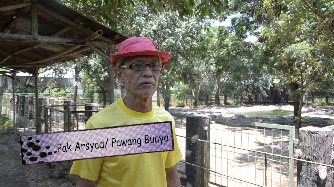Taman Buaya Tanjung Pasir Tangerang Youtube Kab