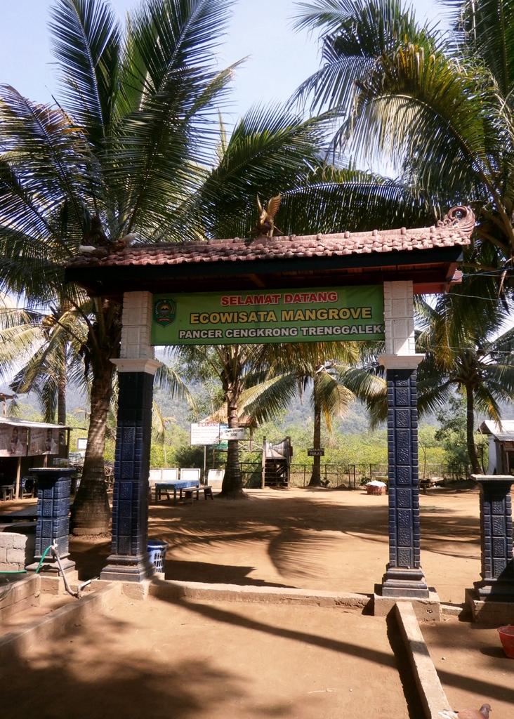 Dolandolen Taman Mangrove Jembatan Cengkrong Trenggalek Pantai Karanggongso Prigi Disayangkan