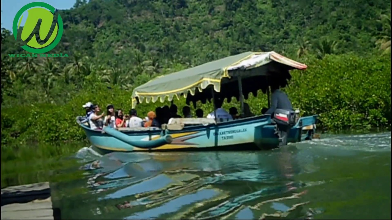 Ekowisata Mangrove Pancer Cengkrong Trenggalek Youtube Hutan Kab