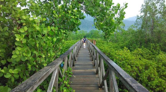 Eksotisme Trenggalek Antara Deretan Mangrove Food Travel Hutan Pancer Cengkrong
